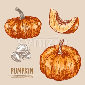 Digital vector color detailed pumpkin hand drawn retro illustration collection set. Thin artistic linear pencil outline. Vintage ink flat style, Stock Vector