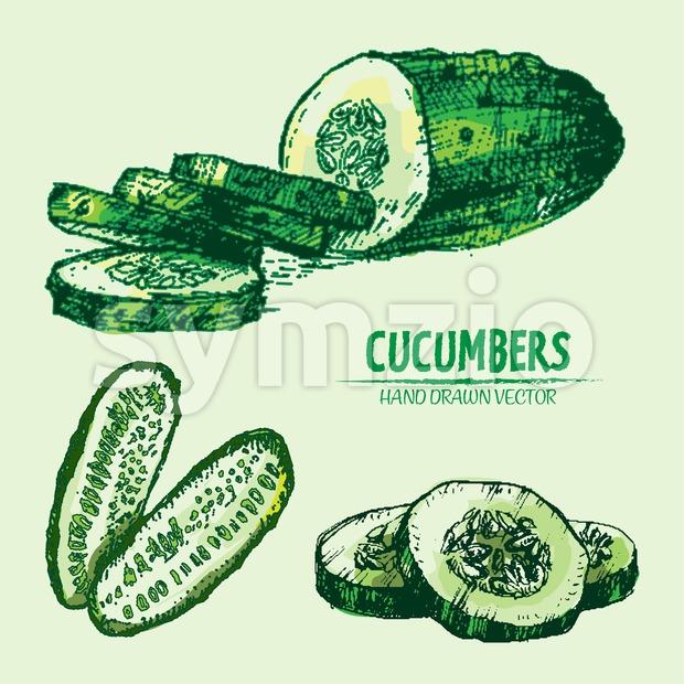 Digital vector detailed line art color cucumber vegetable hand drawn retro illustration collection set. Thin artistic pencil outline. Vintage ink flat Stock Vector