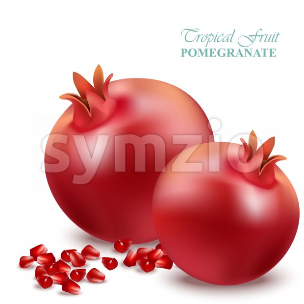 Pomegranate realistic isolated on white Vector illustration Stock Vector