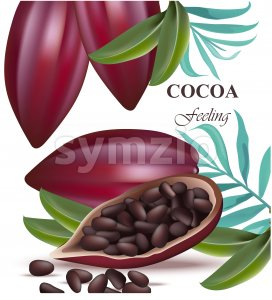 Cocoa beans fruit realistic detailed Vector illustrations Stock Vector