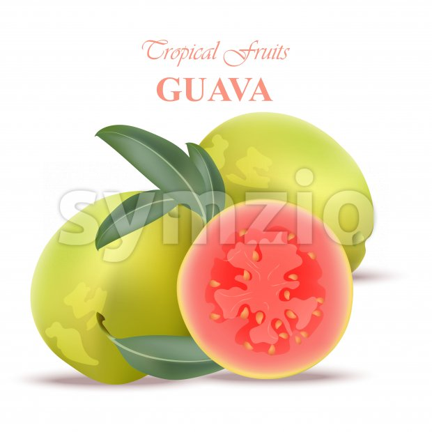 Guava fruit realistic Vector isolated on white backgrounds Stock Vector