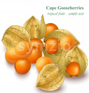 Cape gooseberries realistic Vector illustration isolated on white Stock Vector