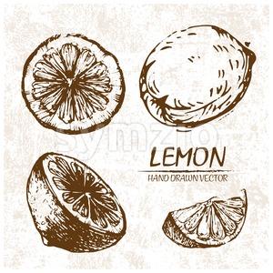 Digital vector detailed lemon hand drawn Stock Vector