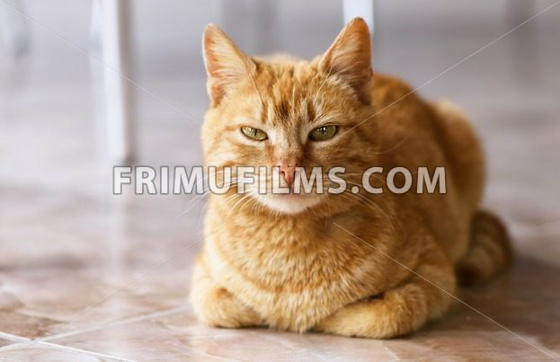Close up photo of red cat with green eyes looking straight towards camera - frimufilms.com