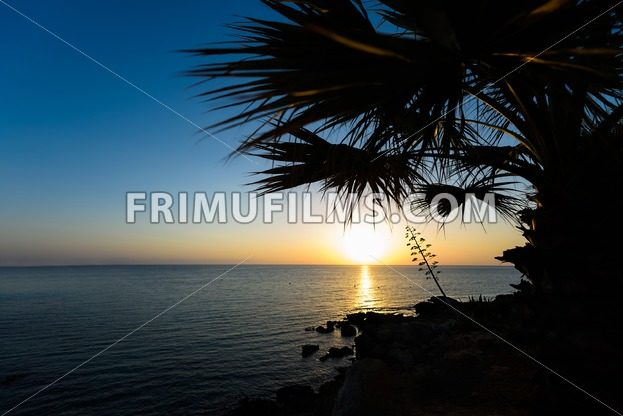Palm trees and sea view at sun rise, in protaras beach, cyprus island - frimufilms.com