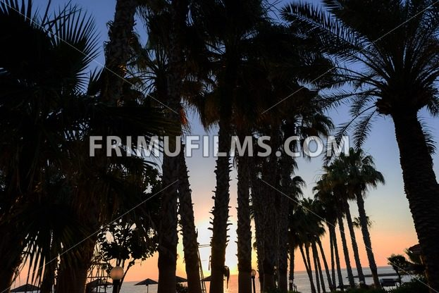 Palm trees and sea view at sunrise, in protaras beach, cyprus island - frimufilms.com