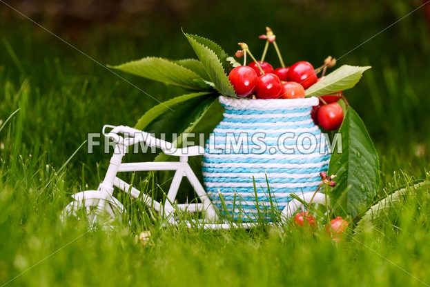 Photo of a white bicycle with cherries and leaves on baggage on green grass - frimufilms.com