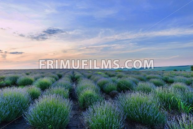 Photo of green and purple flowers - frimufilms.com