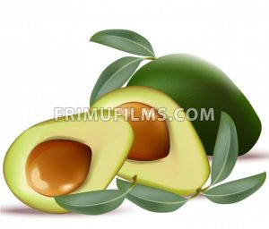 Avocado realistic Vector on white background illustrations - frimufilms.com