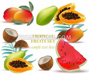 Fruits coconut, avocado, papaya, kiwi, pomegranate, fresh cocoa guava Collection set Vector illustration - frimufilms.com