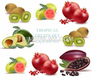 Summer fruits avocado, papaya, kiwi, pomegranate, fresh cocao guava Collection set Vectors - frimufilms.com