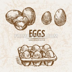 Digital vector detailed line art splitted and packaged eggs hand drawn retro illustration collection set. Thin artistic pencil outline. Vintage ink flat, engraved mill doodle sketches. Isolated - frimufilms.com
