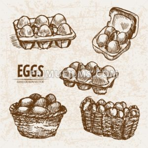 Digital vector detailed line art splitted and packed eggs hand drawn retro illustration collection set. Thin artistic pencil outline. Vintage ink flat, engraved mill doodle sketches. Isolated - frimufilms.com