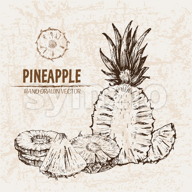 Digital vector detailed line art pineapple fruit hand drawn retro illustration collection set. Thin artistic pencil outline. Vintage ink flat style, Stock Vector