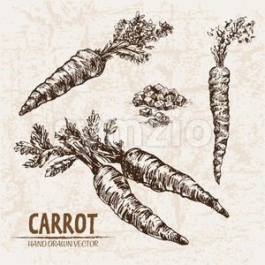Digital vector detailed line art carrot vegetable hand drawn retro illustration collection set. Thin artistic pencil outline. Vintage ink flat style, Stock Vector