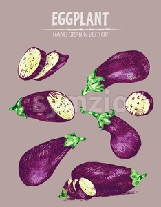 Digital vector detailed line art color eggplant vegetable hand drawn retro illustration collection set. Thin artistic pencil outline. Vintage ink flat Stock Vector