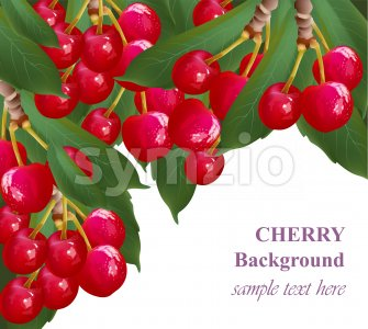 Cherry fruits background growing branches Vectors illustration Stock Vector
