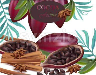 Cocoa beans and cinnamon realistic detailed Vector exotica Stock Vector
