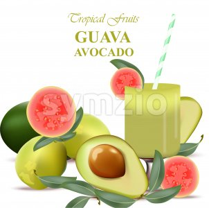 Guava and avocado fruits realistic Vector isolated on white background Stock Vector