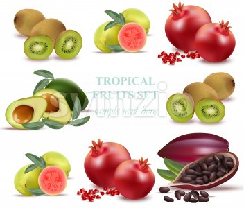 Summer fruits avocado, papaya, kiwi, pomegranate, fresh cocao guava Collection set Vectors Stock Vector