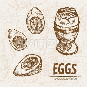 Digital vector detailed line art cooked egg in cup hand drawn retro illustration collection set. Thin artistic pencil outline. Vintage ink flat, Stock Vector