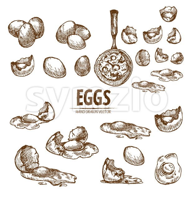 Digital vector detailed line art splitted scratch and whole eggs hand drawn retro illustration collection set. Thin artistic pencil outline. Vintage Stock Vector