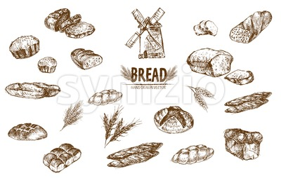 Digital vector detailed line art baked bread and dried wheat hand drawn retro illustration collection set. Thin artistic pencil outline. Vintage ink Stock Vector