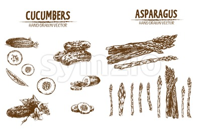 Digital vector detailed line art cucumber and asparagus vegetable hand drawn retro illustration collection set. Thin artistic pencil outline. Vintage Stock Vector