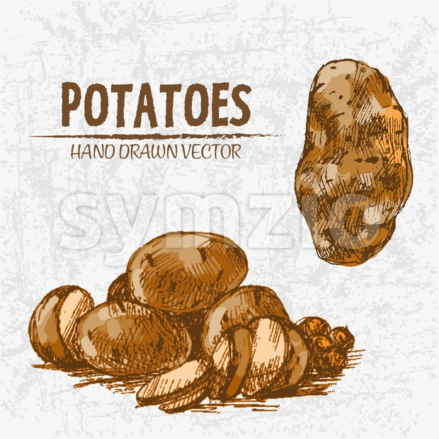Digital color vector detailed line art golden sliced and whole potatoes hand drawn retro illustration set. Thin pencil artistic outline. ...