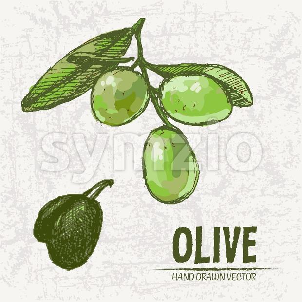 Digital color vector detailed line art fresh green olives on branches hand drawn retro illustration set. Thin pencil artistic outline. Vintage ink Stock Vector