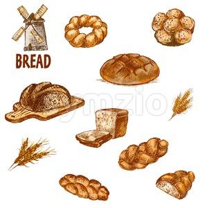Digital color vector bundle set detailed line art golden loaf of rye bread, slices and wheat hand drawn illustration set. Thin artistic pencil Stock Vector