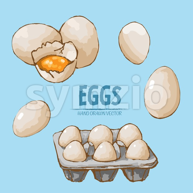 Digital vector detailed line art splitted and packaged eggs hand drawn retro illustration collection set. Thin artistic pencil outline. Vintage ink Stock Vector