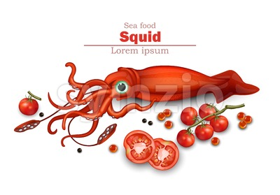 Squid isolated on white Vector. Seafood card background illustration Stock Vector