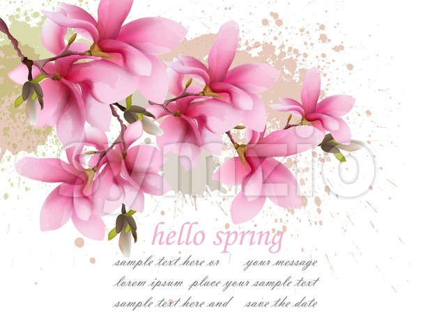 Hello spring pink flowers card Vector. Watercolor splash Lovely greeting. Delicate illustration background Stock Vector
