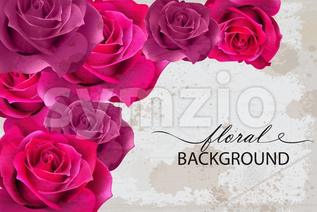 Vector floral background card with Fuchsia roses. 3d realistic flower design Stock Vector